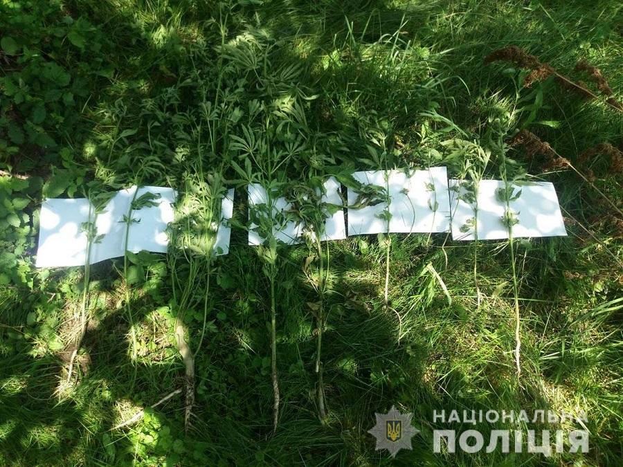 Konopli_Kelmentzi1_160619